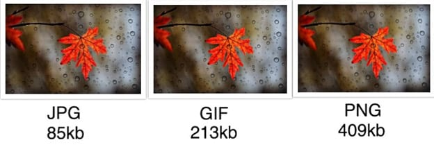 Optimized Images of a leaf